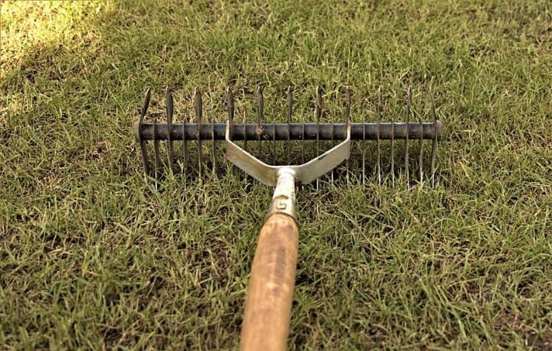 garden-lawn-care-tips-2-scarify-to-remove-thatch