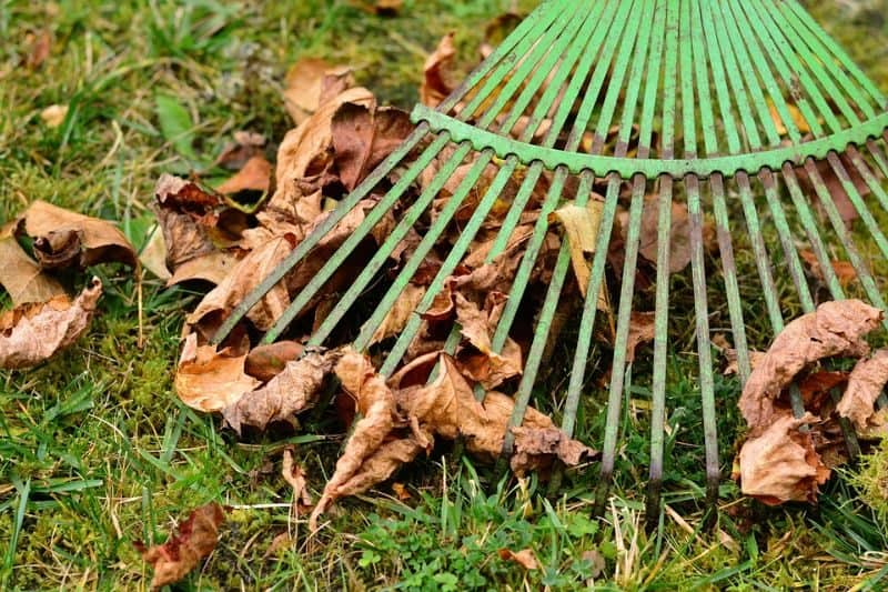 garden-lawn-care-tips-3-rake-up-leaves-as-they-fall
