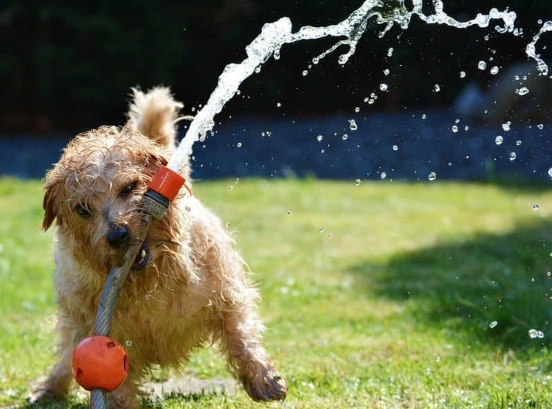 garden-lawn-care-tips-37-clean-up-after-your-pooch