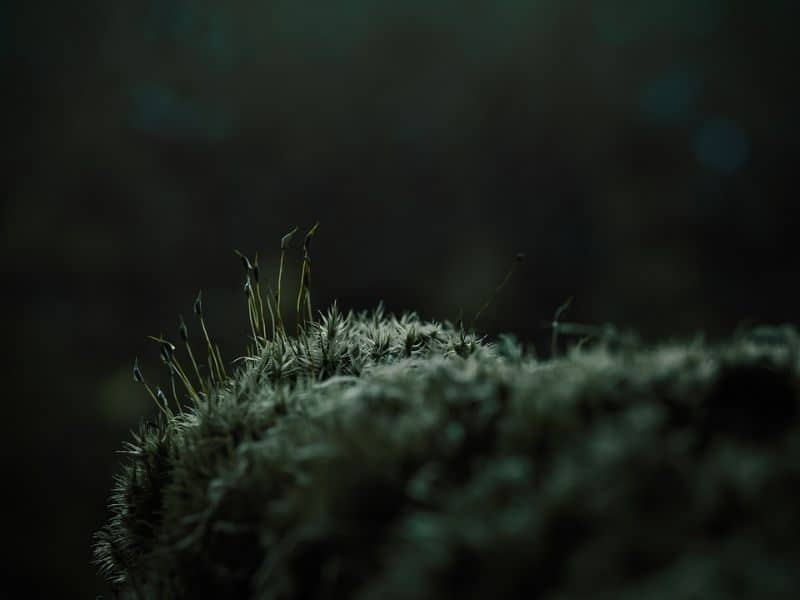 garden-lawn-care-tips-4-keep-an-eye-on-moss