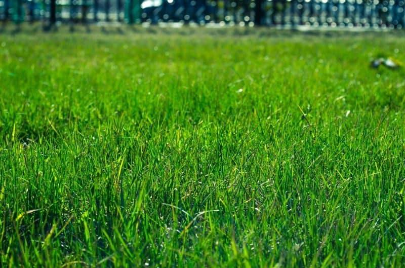 garden-lawn-care-tips-41-install-sod