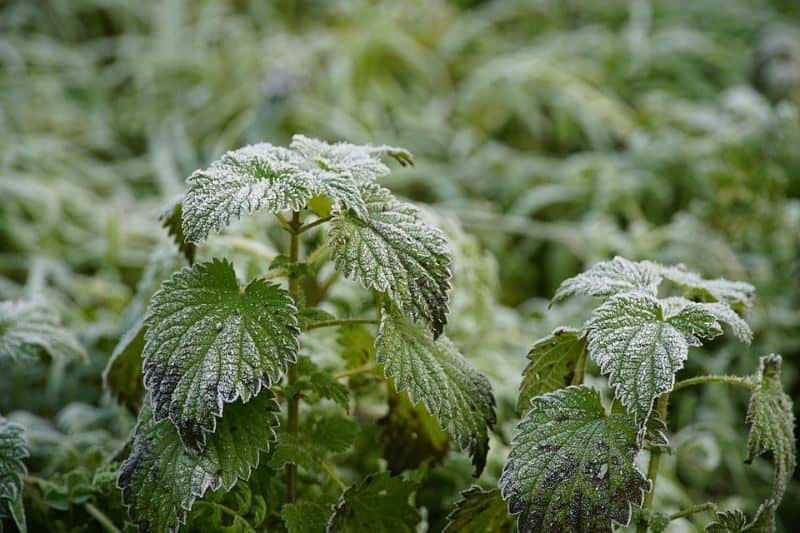 garden-lawn-care-tips-55-keep-an-eye-for-winter-weeds
