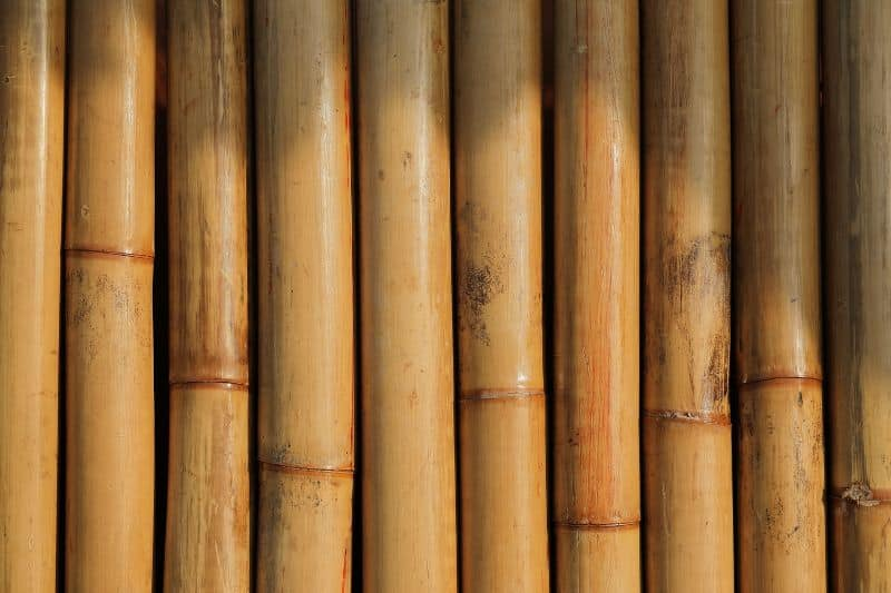 garden-screening-2019-ideas-1-bamboo