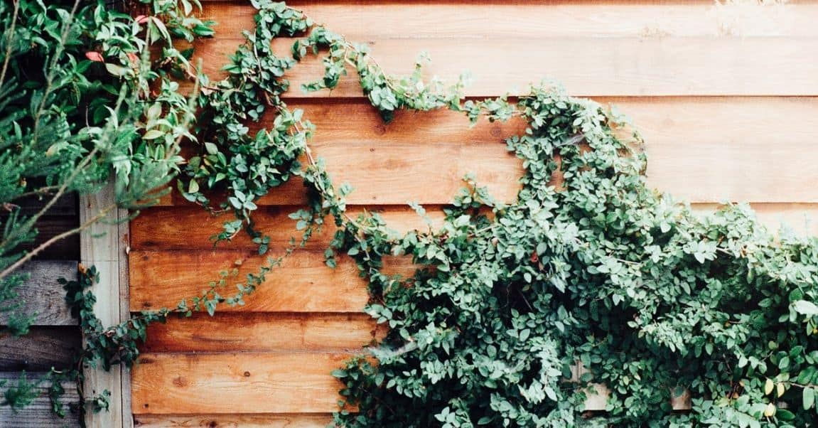 garden-wildlife-watching-room-4-grow-vines-climbers-pexels