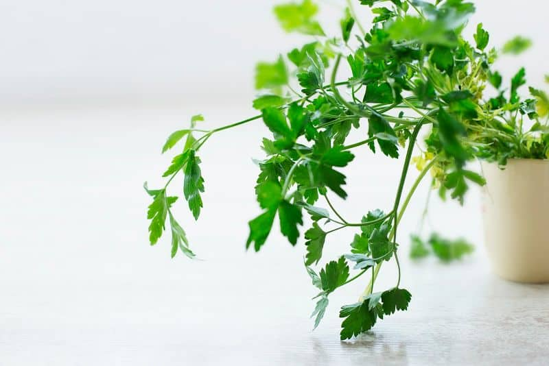 grow-your-own-herbs-1-indoors-our-outdoors