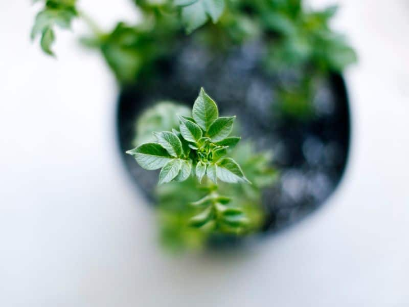 grow-your-own-herbs-4-indoors