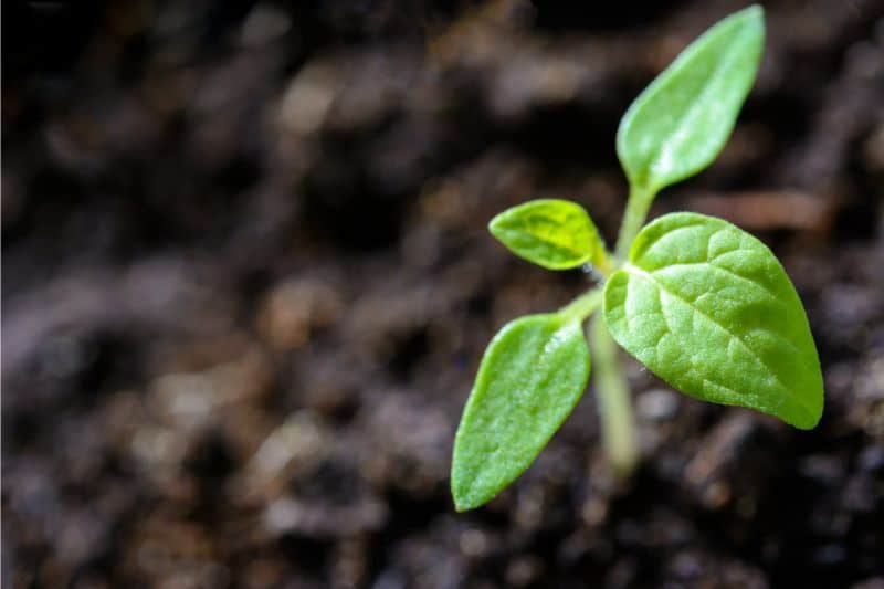 growing-calendar-monthly-sowing-guide-1-january