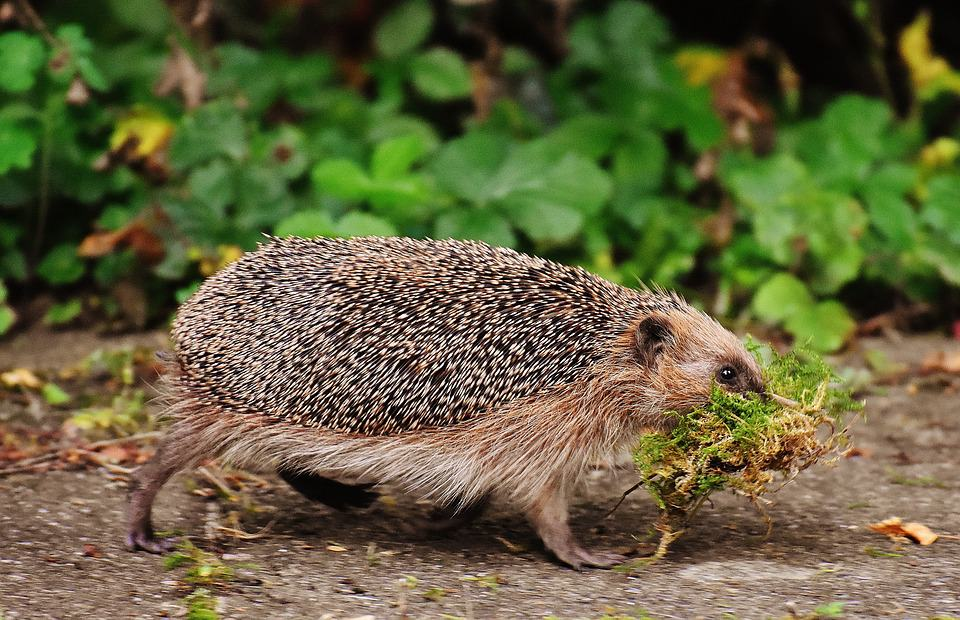 How To Help Hedgehogs In Your Garden Shed Blog Garden