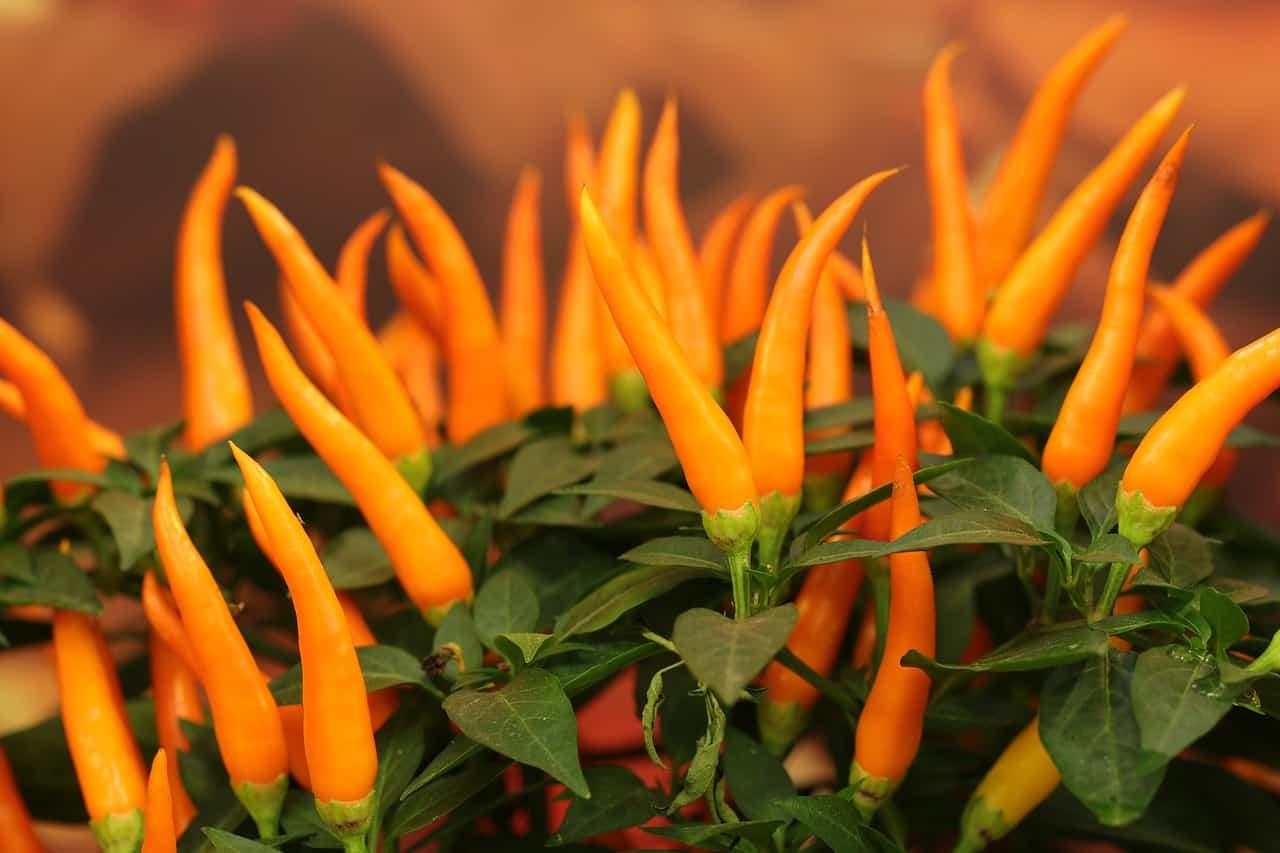 indoor-crops-8-peppers-pixabay