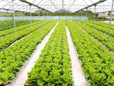 lettuce with nice view rm 1 The Hydroponics Resource
