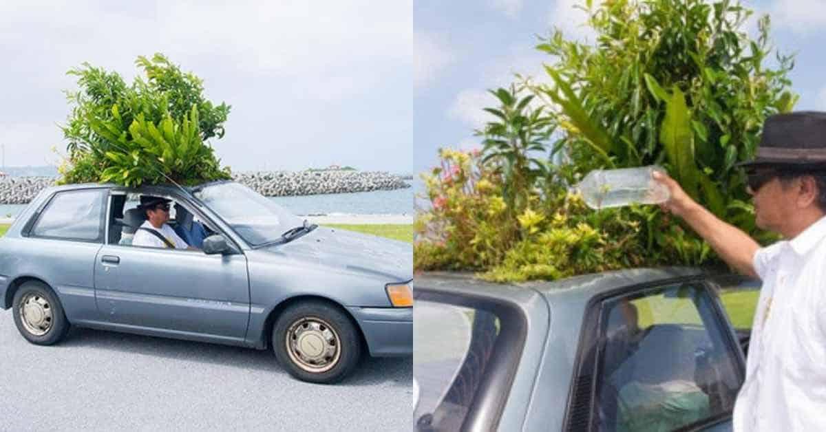 man-growing-garden-car-roof