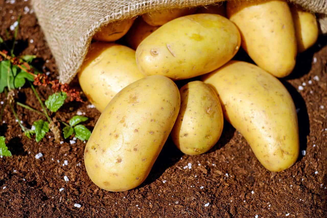 may-gardening-jobs-4-plant-potatoes-pixabay