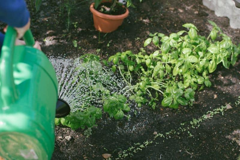 mistakes-garden-novices-should-avoid-1-overwatering-unsplash