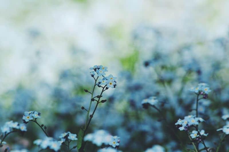 mistakes-garden-novices-should-avoid-5-weeding-or-not-unsplash