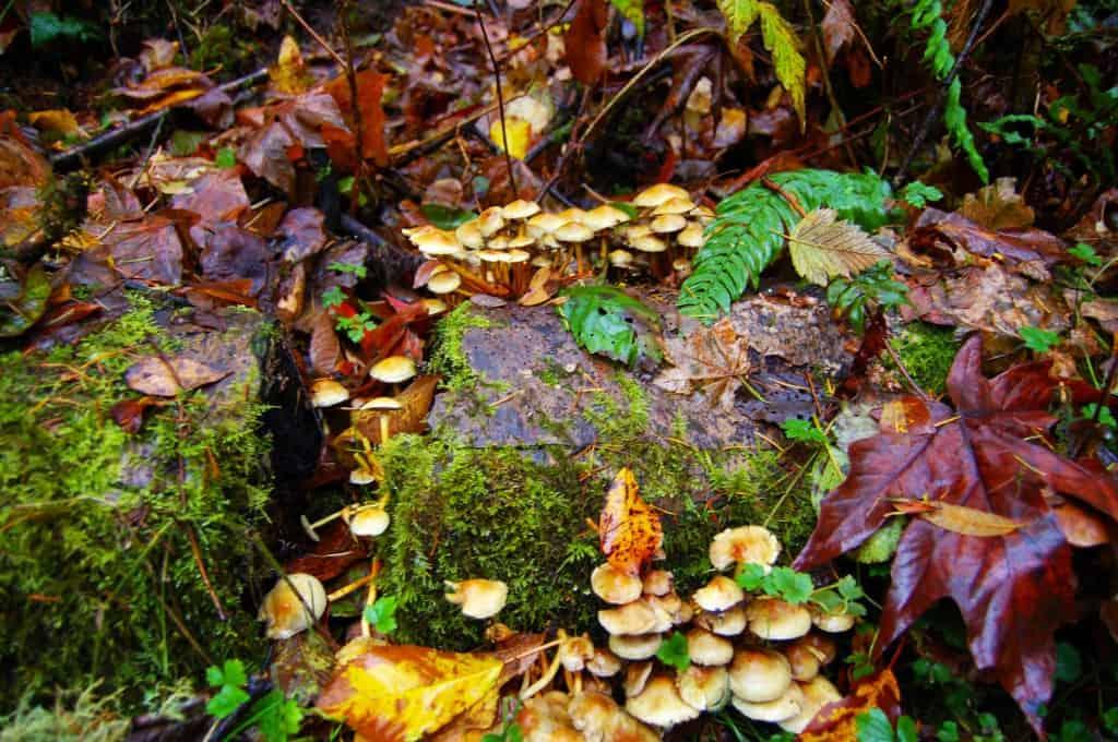 musrooms cream The Fungus Among Us