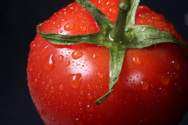plant-world-records-guide-2-tomato