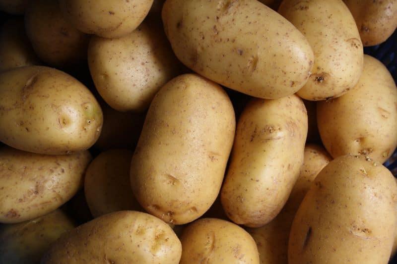 plant-world-records-guide-3-potato