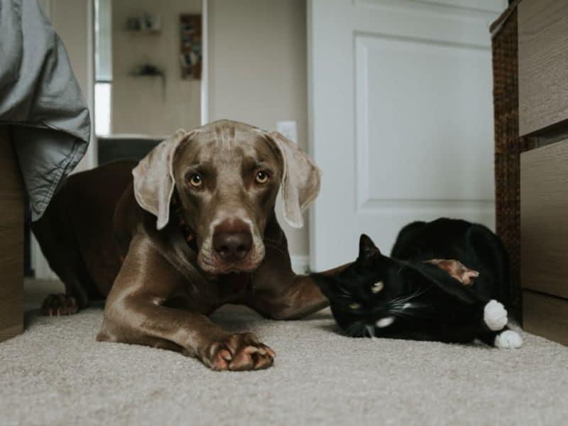 rats-in-the-garden-6-pets-as-deterrent-unsplash