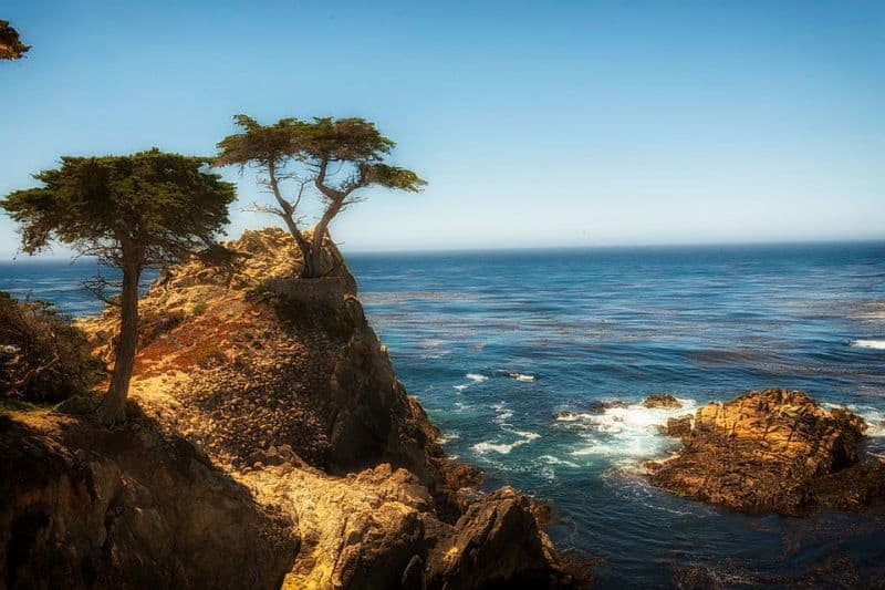sacred-iconic-trees-around-world-5-the-lone-cypress-tree