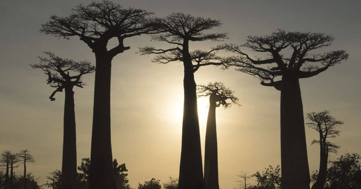 sacred-iconic-trees-around-world