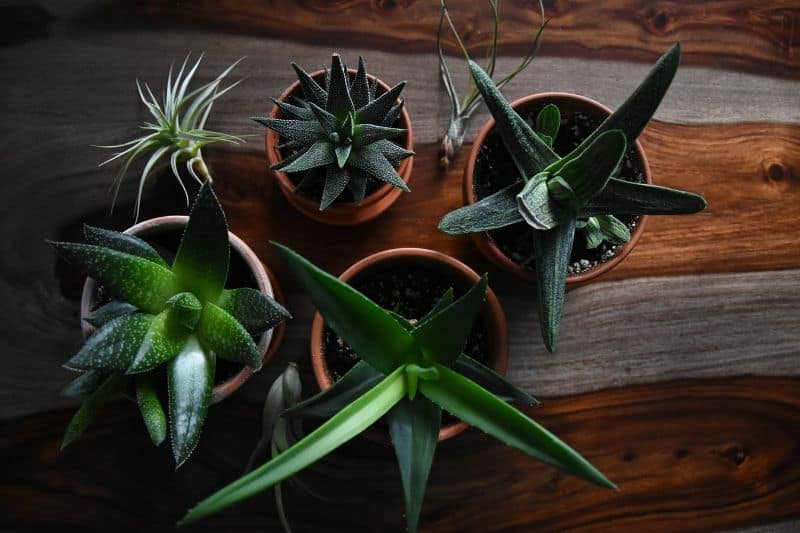 shed-writers-retreat-cabin-2-add-some-houseplants