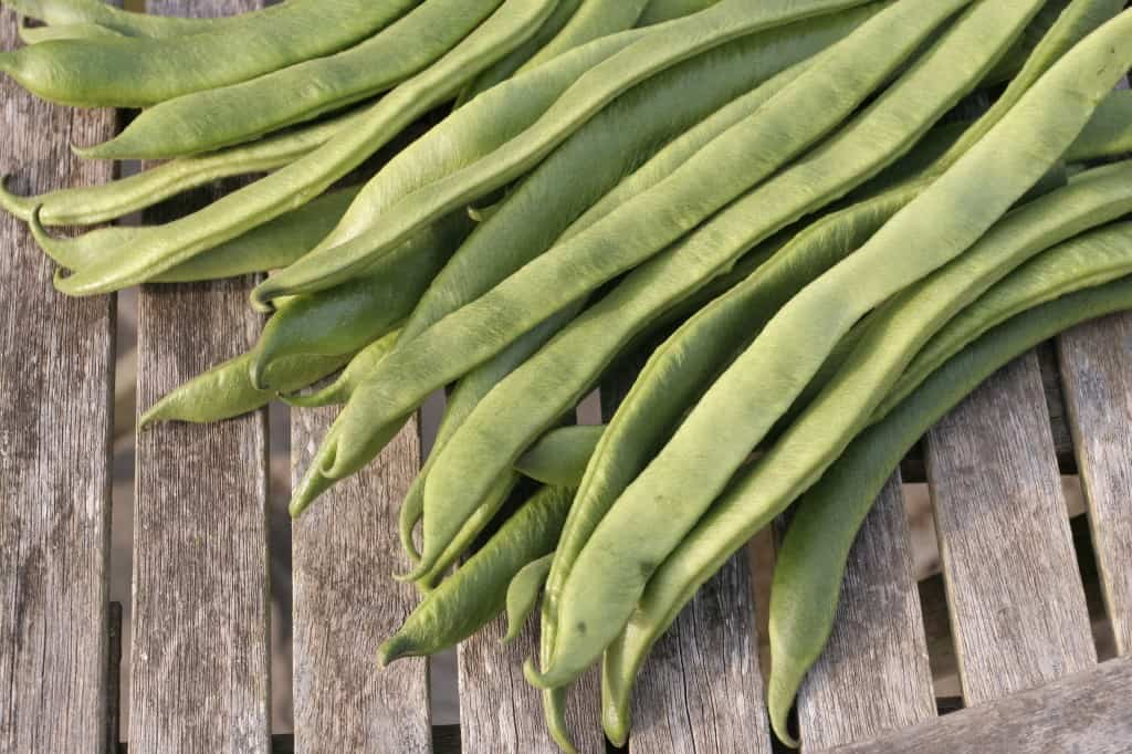 shutterstock 209777248 10 Vegetables To Plant Now and Eat as an Exciting Winter Meal [Updated]
