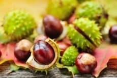 regrow chestnuts
