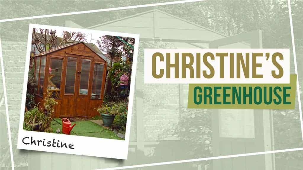 single layout 9 Christines BillyOh 4000 Lincoln Wooden Greenhouse