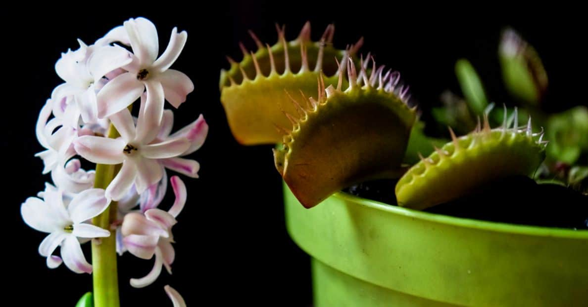 six-plants-difficult-grow