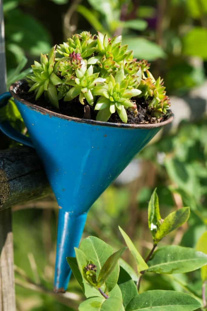smallfunnel 683x1024 10 Creative Recycled Hanging Basket Ideas