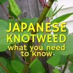 stencil.default 10 6 150x150 Japanese Knotweed: The Definitive Guide