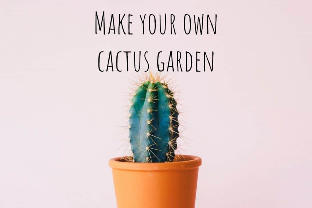 How to Make An Indoor Prickly Cactus Garden!