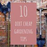 10 Dirt Cheap Gardening Tips