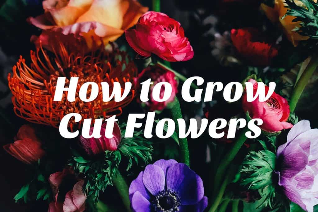 stencil.default 23 4 How to Grow Cut Flowers