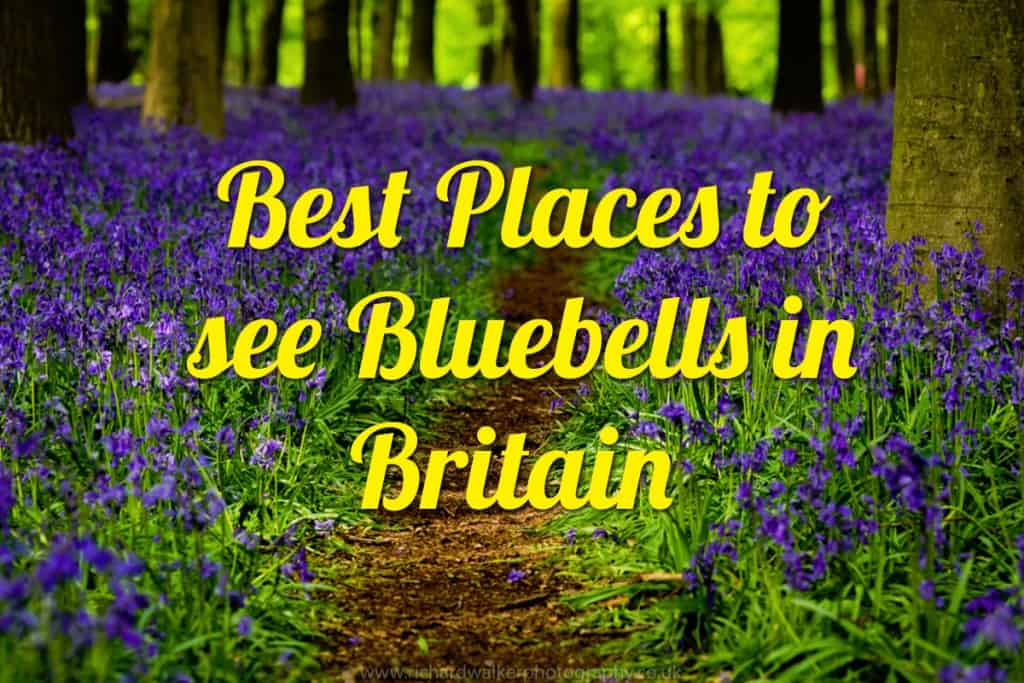 Best Places to See Bluebells in Britain