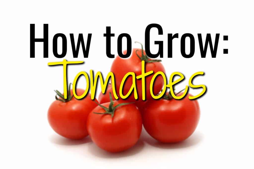 stencil.default 29 1 How to Grow Tomatoes