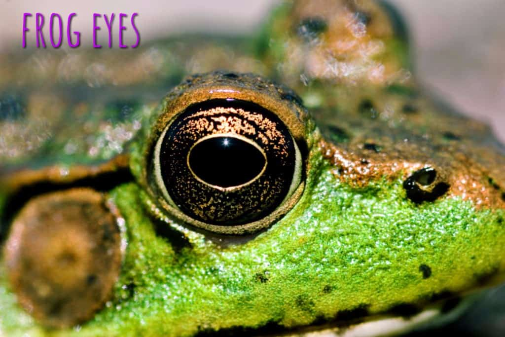 Fun Facts About Frogs | Garden Buildings Direct Blog