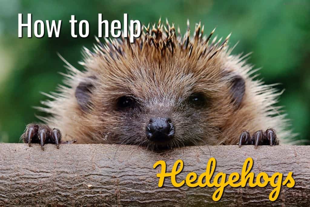 stencil.default 30 4 How To Help Hedgehogs In Your Garden