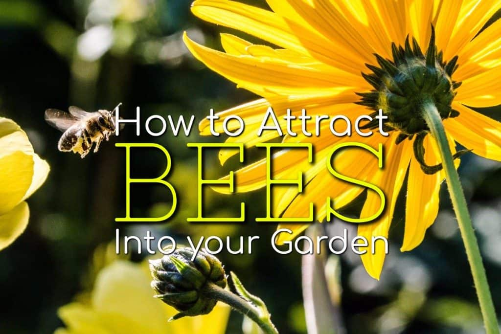 how to attract and keep bees in your garden
