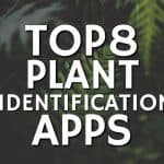 stencil.default 7 7 150x150 Your Ultimate Plant Identification & Useful Reference Guide