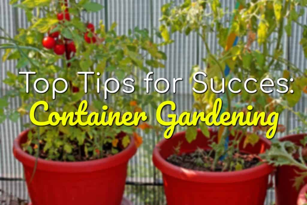 stencil.default 7 8 Container Gardening: Top Tips For Success