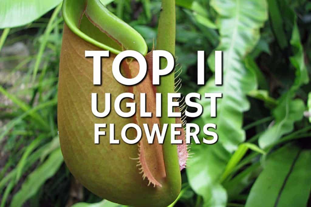 stencil.default 8 4 Top 11 Ugliest Flowers