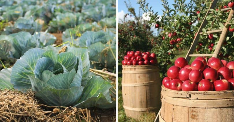 sustainable-garden-this-summer-3-grow-your-organic-fruit-and-vegetable