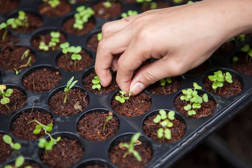 sustainable-garden-this-summer-4-save-your-seeds