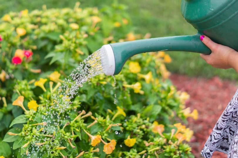 sustainable-garden-this-summer-5-conserve-water