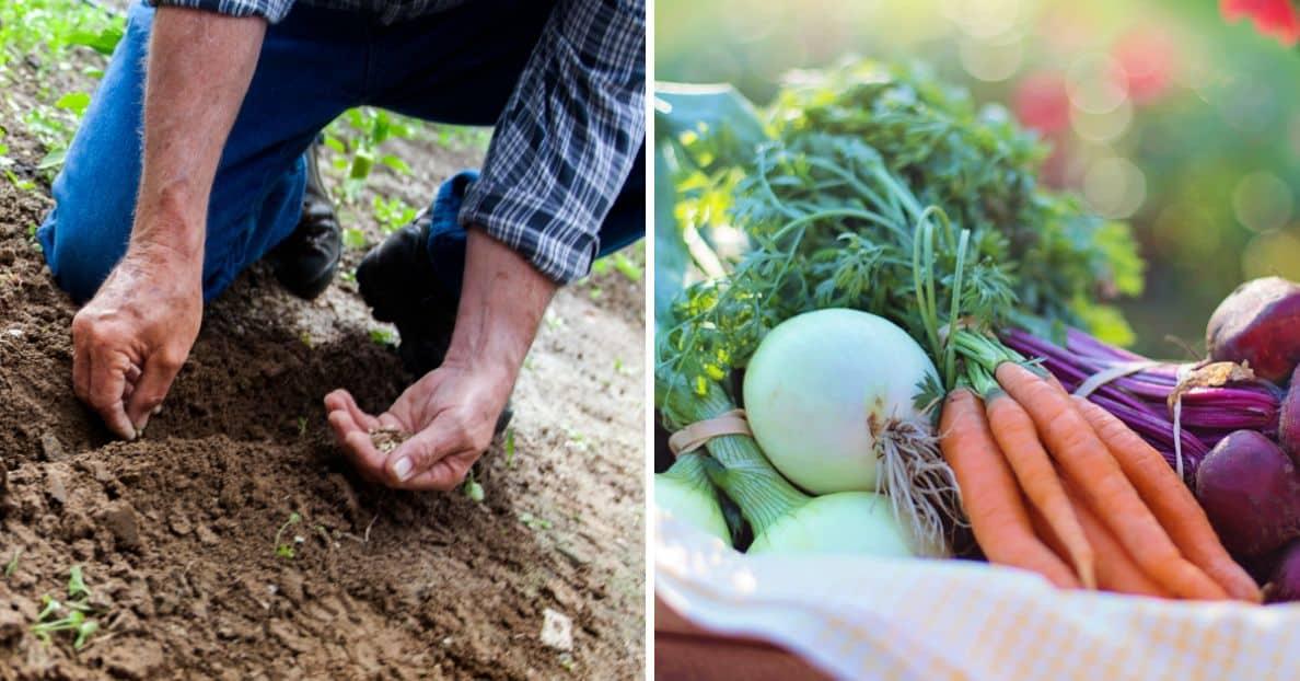 sustainable-garden-this-summer