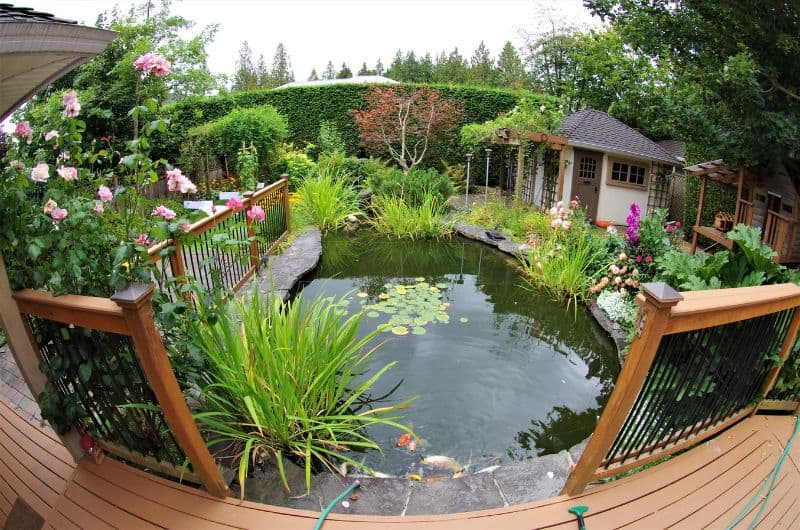 tips-garden-diy-pond-2-keep-it-suitable
