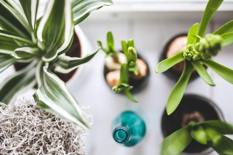 top-gardening-trends-for-2020-2-houseplant-pixabay
