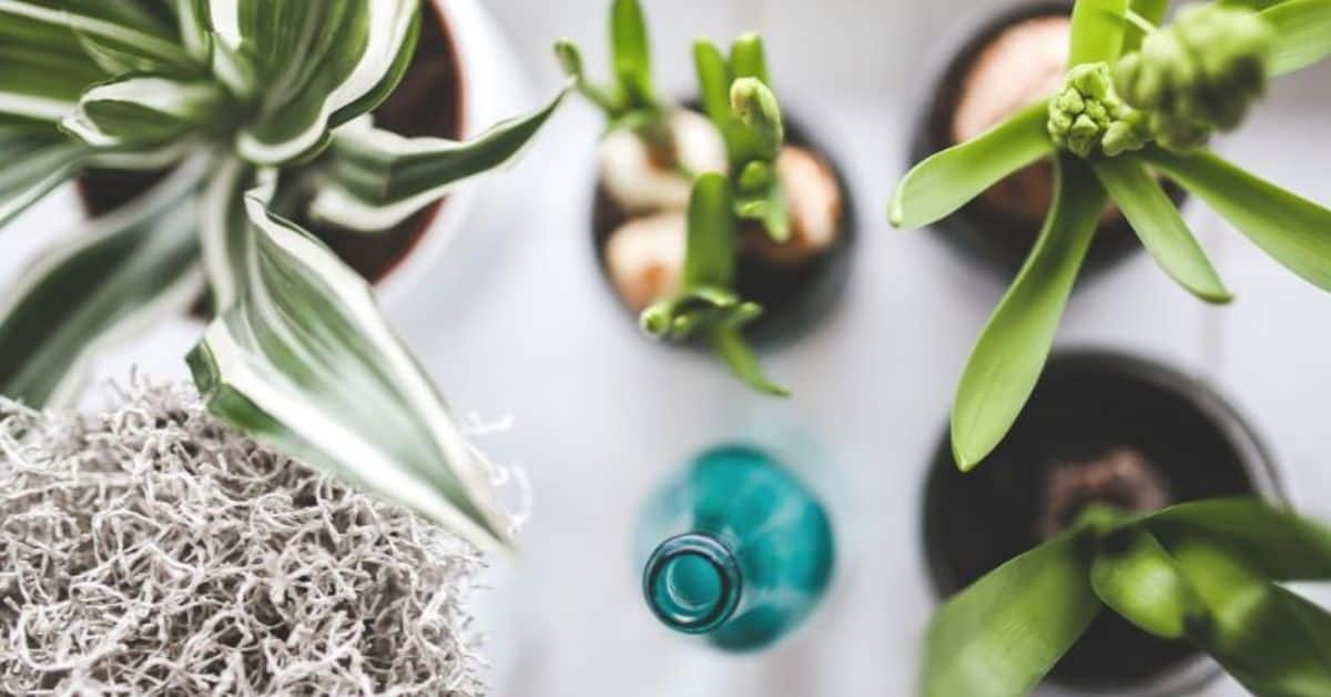 top-gardening-trends-for-2020