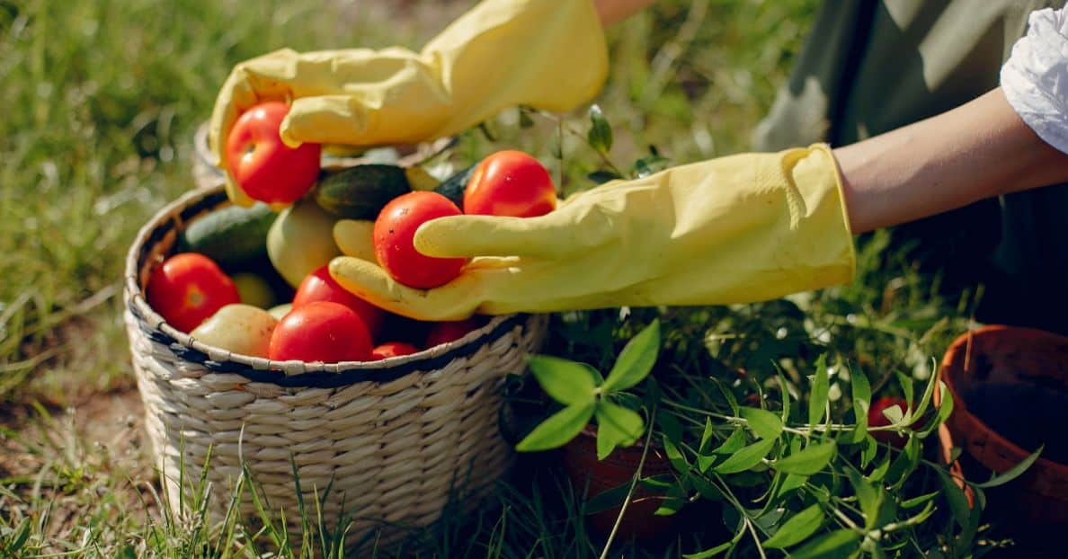 useful-gardening-tips-1-vegetable-gardening